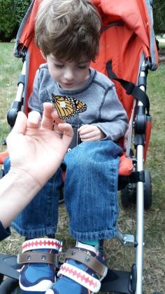 wyatt butterfly
