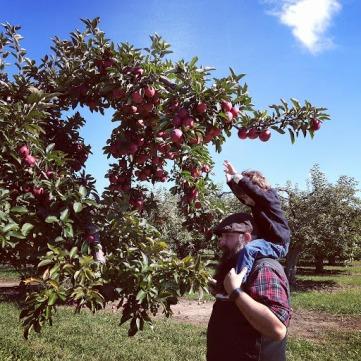 orchard 1
